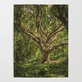 Tree Appreciation Poster