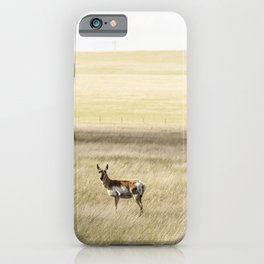 A lone antelope on the Laramie Plains a high grassland south of Laramie Wyoming iPhone Case
