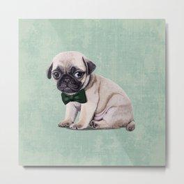 Angry Pug Metal Print