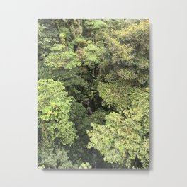 Tree Canopy Metal Print