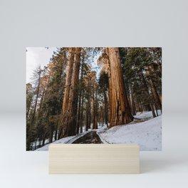 Sequoia's Standing Guard Mini Art Print