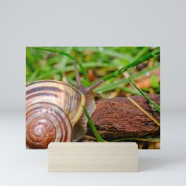Springtime Snail Photograph Mini Art Print