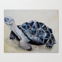 tortoise Canvas Prints featuring Tortoise by Brooks Cavender