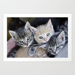Kittens, 3 balls of tenderness Art Print