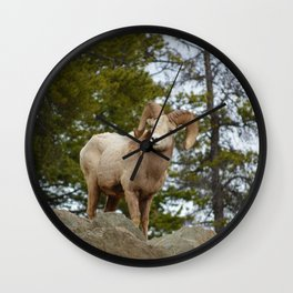Big horn sheep in Jasper National Park | Alberta Wall Clock