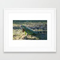 iggy Framed Art Prints featuring Iggy by Still Light