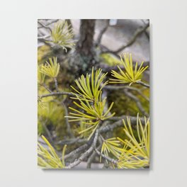New Growth Pine Metal Print