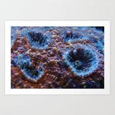 Acanthastrea Echinata Macro Art Print