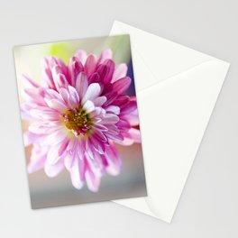 Padre Cerise Belgian Mum Alternate Focus Stationery Cards