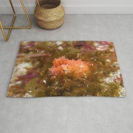 Adorably angry orange cuttlefish Rug