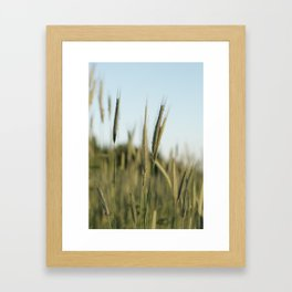 A rich crop Framed Art Print