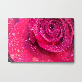Spirals Of Rain Drops On A Red Rose Metal Print