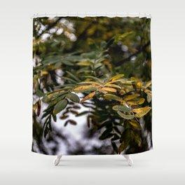 Autumnal leaves on tree Shower Curtain