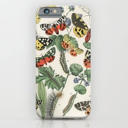 Illustrations from the book European Butterflies and Moths by William Forsell Kirby (1882) a kaleidoscope of fluttering butterflies and caterpillars iPhone Case