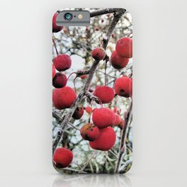 Crabapples in Winter iPhone Case