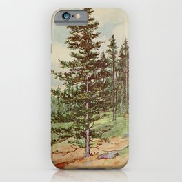 Vintage Print - Familiar Trees and Leaves (1911) - Red Spruce iPhone Case