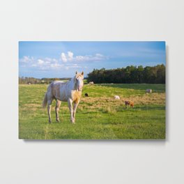 Horse in the Pasture Metal Print