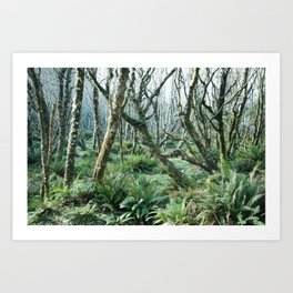 In The Forests at Cape Lookout Art Print