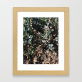 Browning Bush Framed Art Print