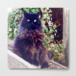 The King of cats Pomponio Mela Metal Print