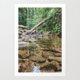 Forest is our country treasure, we have to protect it from harm. Art Print