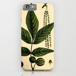 Small-fruited Hickory, carya microcarpa Redoute Roses 3 iPhone Case
