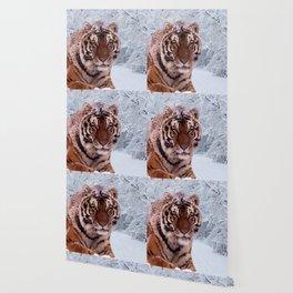 Tiger and Snow Wallpaper