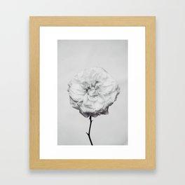 Flower Rose Framed Art Print