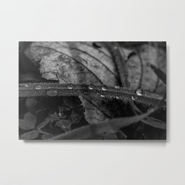 Black and white raindrops on grass Metal Print