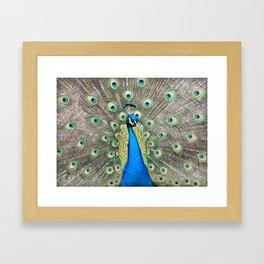 Flamboyant Peacock Framed Art Print