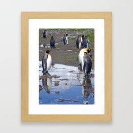 King Penguin Reflection Framed Art Print