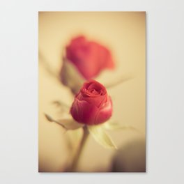 A red rose for your sweetheart ... Canvas Print