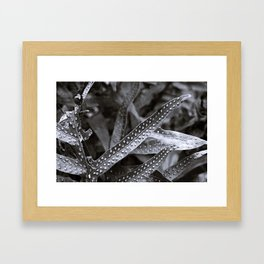 Beauty in the shades of Hawaii Framed Art Print