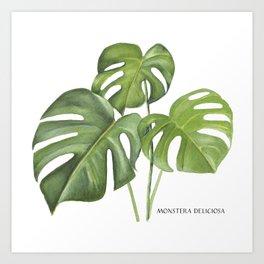 Monstera deliciosa 3 Leaves Art Print