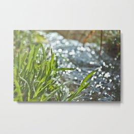 Grass Sprout by Spring Metal Print