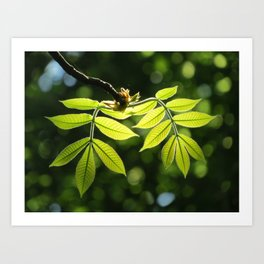 Light in the Leaves Art Print