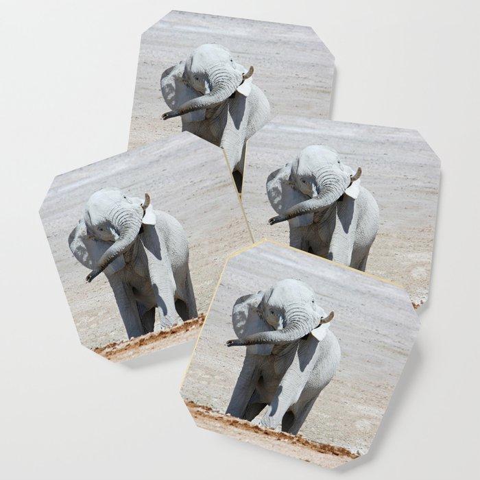 NAMIBIA ... Elephant fun I Coaster
