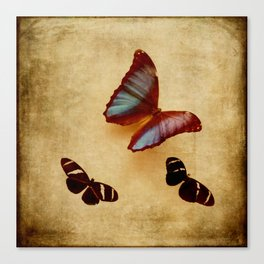 Vintage Butterfly Display Brown and Blue Canvas Print