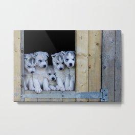 Husky puppies Metal Print