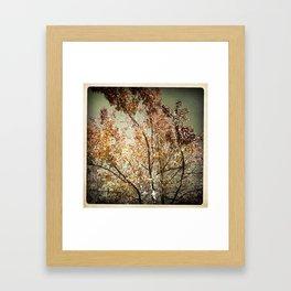 Tree In Autumn Framed Art Print