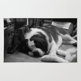 Sleeping Saint Bernards Rug