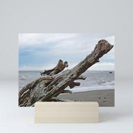 Natural Driftwood Mini Art Print