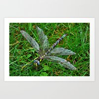 dragonfly Art Prints featuring dragonfly by  Agostino Lo Coco