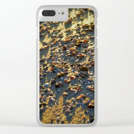 Shells on the Sand by reay of light Clear iPhone Case