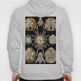 Ernst Haeckel Echinidea Sea Urchin Hoody