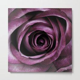 Purple Rose Decorative Flower Metal Print