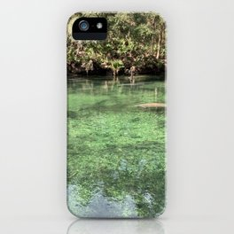Manatees at Blue Spring State Park iPhone Case