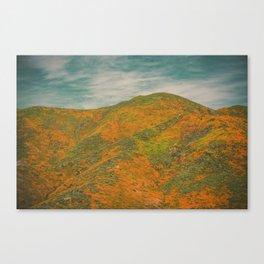 California Poppies 036 Canvas Print