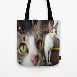 Back Yard Kitties  Tote Bag