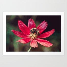 Pollen Collection. Bee Photograph Art Print